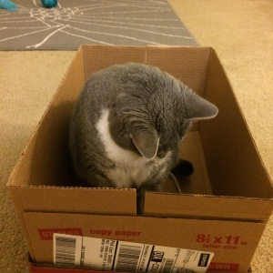 Cat follows string into box
