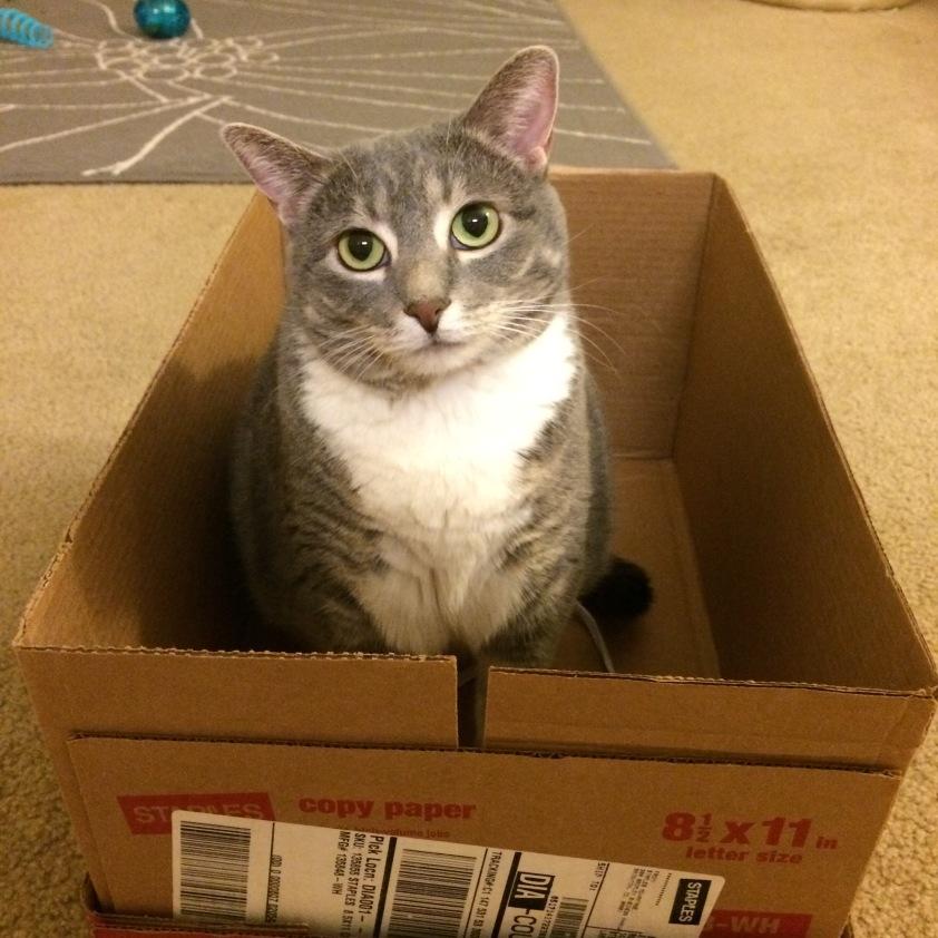 Derisive cat in box