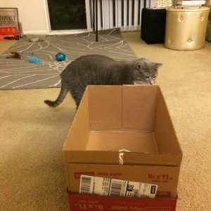 Cat walks next to box