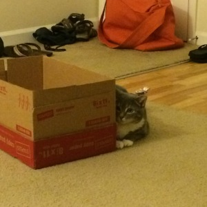 Cat Hides Behind Box