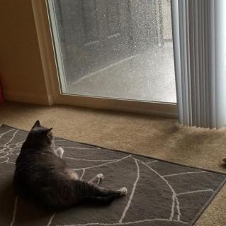 calm_cat_rain